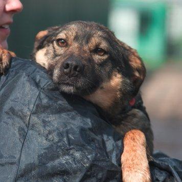 Каштанка - Собаки в добрые руки