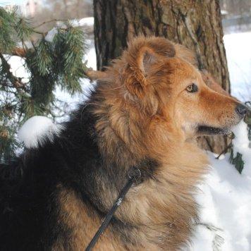 Норочка - Собаки в добрые руки
