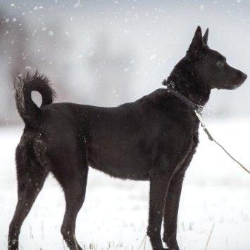 Ладушка - Собаки в добрые руки