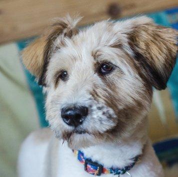 Плюшкин - Собаки в добрые руки