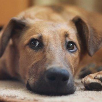 Алик - Собаки в добрые руки