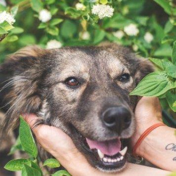 Мишель - Собаки в добрые руки