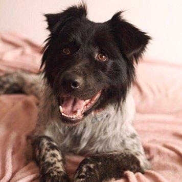 Нимфа - Собаки в добрые руки
