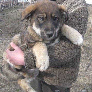 Лёва (предварительно) - Собаки в добрые руки