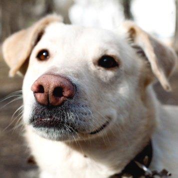Зефир - Собаки в добрые руки