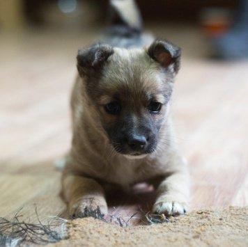 Малютка - Собаки в добрые руки