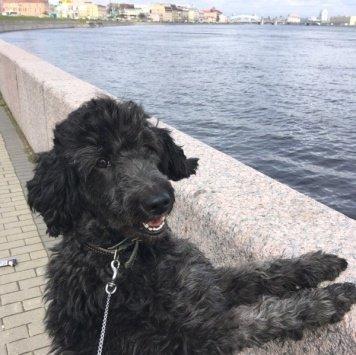 Джеральдина (Джера) - Собаки в добрые руки