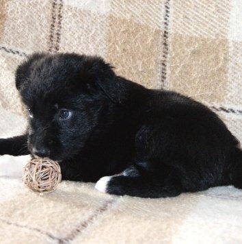 Виола - Собаки в добрые руки