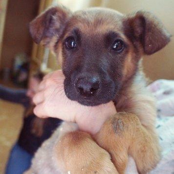 Джери - Собаки в добрые руки