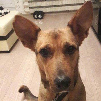 Пепперони - Найденные собаки