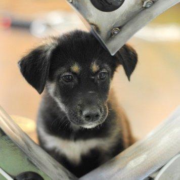 Надежда - Собаки в добрые руки