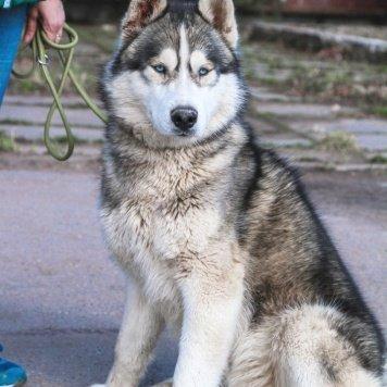 Тархун - Собаки в добрые руки