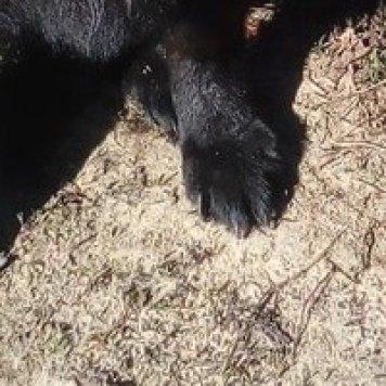 Веста - Собаки в добрые руки