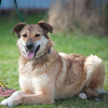 Лотти - Собаки в добрые руки