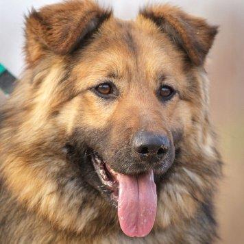 Шарон - Собаки в добрые руки