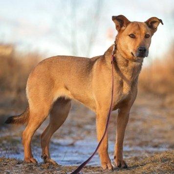 Камила - Собаки в добрые руки