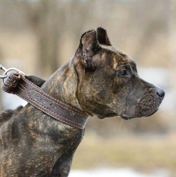 Ялла - Собаки в добрые руки