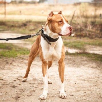 Беринг - Собаки в добрые руки