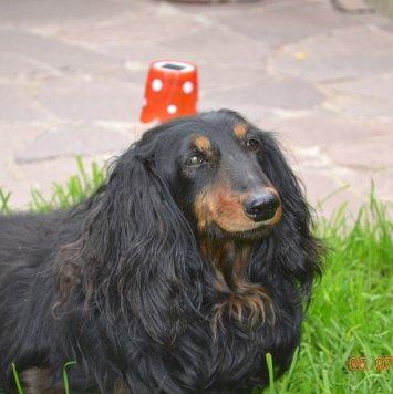 Антошка - Собаки в добрые руки