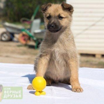 Кубик - Собаки в добрые руки