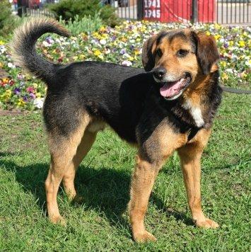 Астерикс - Собаки в добрые руки