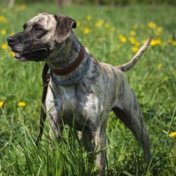 Кассион - Собаки в добрые руки