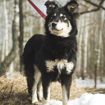 Тор - Собаки в добрые руки