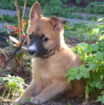 Терри - Собаки в добрые руки