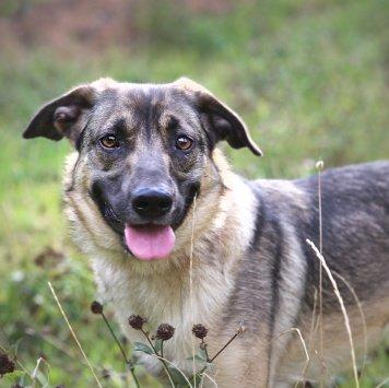 Дюся - Собаки в добрые руки
