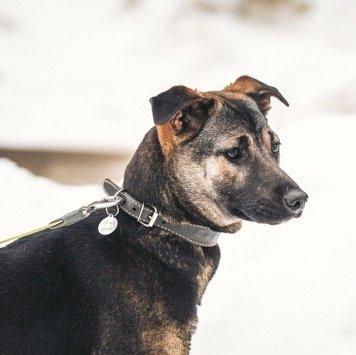 Эльза - Собаки в добрые руки