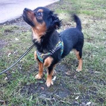 Лилу - Собаки в добрые руки