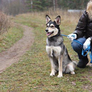 Джуля - Собаки в добрые руки