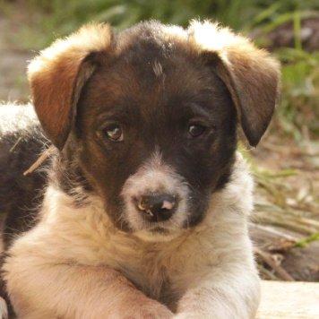 Конопатая Ася - Собаки в добрые руки