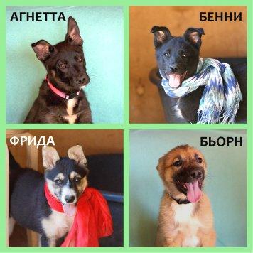 Аввики - Собаки в добрые руки