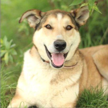 Гуффи - Собаки в добрые руки