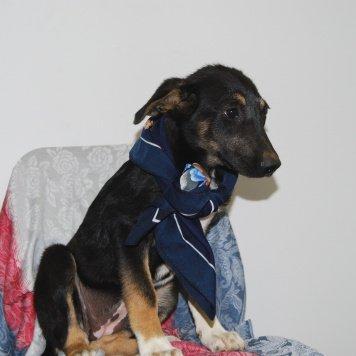 Джесика - Собаки в добрые руки
