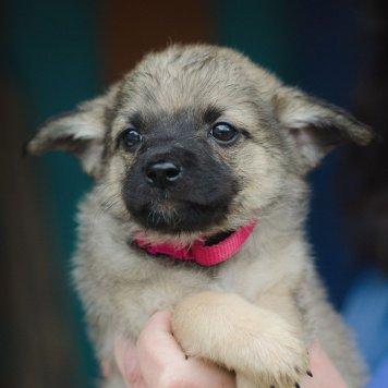 Барбара (Варенька) - Собаки в добрые руки