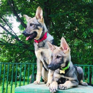 Пэнни и Паркер - Собаки в добрые руки