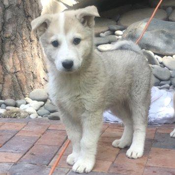 лаки - Собаки в добрые руки