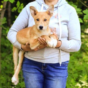 Арсений - Собаки в добрые руки