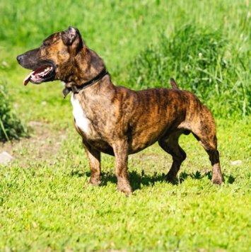 Кореш - Собаки в добрые руки