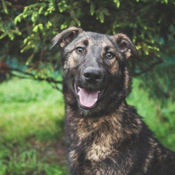 Люк - Собаки в добрые руки