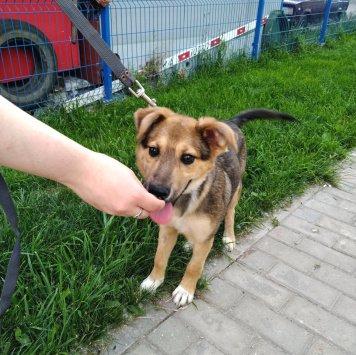 Бера - Собаки в добрые руки