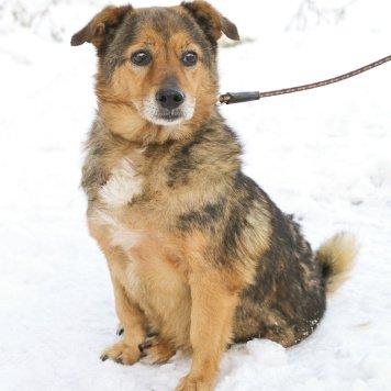 Сан Саныч - Собаки в добрые руки