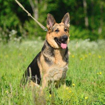 Дафа - Собаки в добрые руки