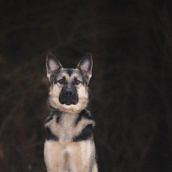 Маглай - Собаки в добрые руки