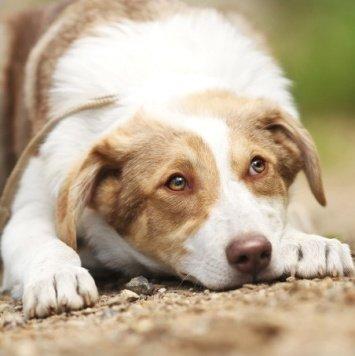 Леха - Собаки в добрые руки