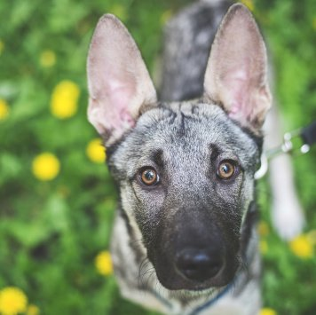 Ияр - Собаки в добрые руки
