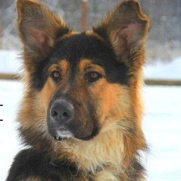 Айрон - Собаки в добрые руки