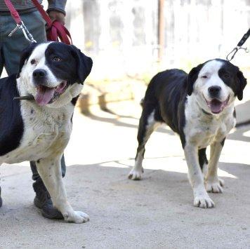Альба и Бьянка - Собаки в добрые руки